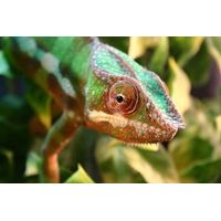Animal Keeper Mini Experience for One Child - Reptiles & Mini Beasts