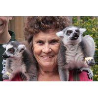 Meet the Lemurs Experience