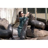 Zookeeper for a Day at Bristol Zoo Gardens