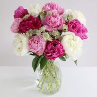 Mixed Peonies - flowers