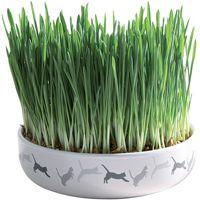 Ceramic Cat Grass Bowl - Bowl + 50g Seed