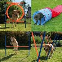 Fun & Sport Complete Dog Agility Course - 4 Agility Equipments