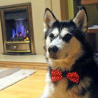 Reversible Pet Bow Tie
