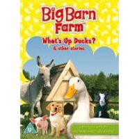 Big Barn Farm: Whats Up Ducks?