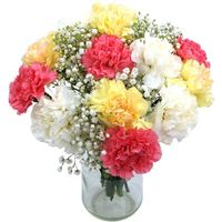 Mixed Carnations (by courier)