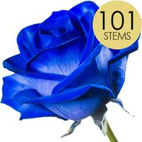 101 Blue Roses