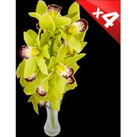 4 Classic GREEN Cymbidium Orchids