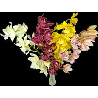 4 Classic Mixed Cymbidium Orchids