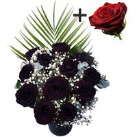 A single Red Rose surrounded by 11 Black Roses