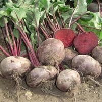 Beetroot Kahira (Egyptian Flat Rooted) - Heritage - 1 packet (300 beetroot seeds)