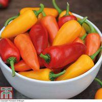 Chilli Pepper Fresno Mix F1 - 6 chilli pepper Postiplug plants