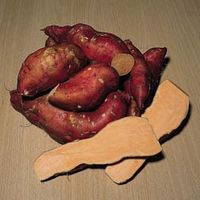 Sweet Potato Beauregard Improved - 6 deep root premium sweet potato plugs
