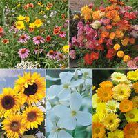 Wildflower Mix - 1 wildflower collection
