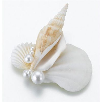 Seashell Boutonniere for Groom Groomsmen Wedding Party Beach Theme Shell