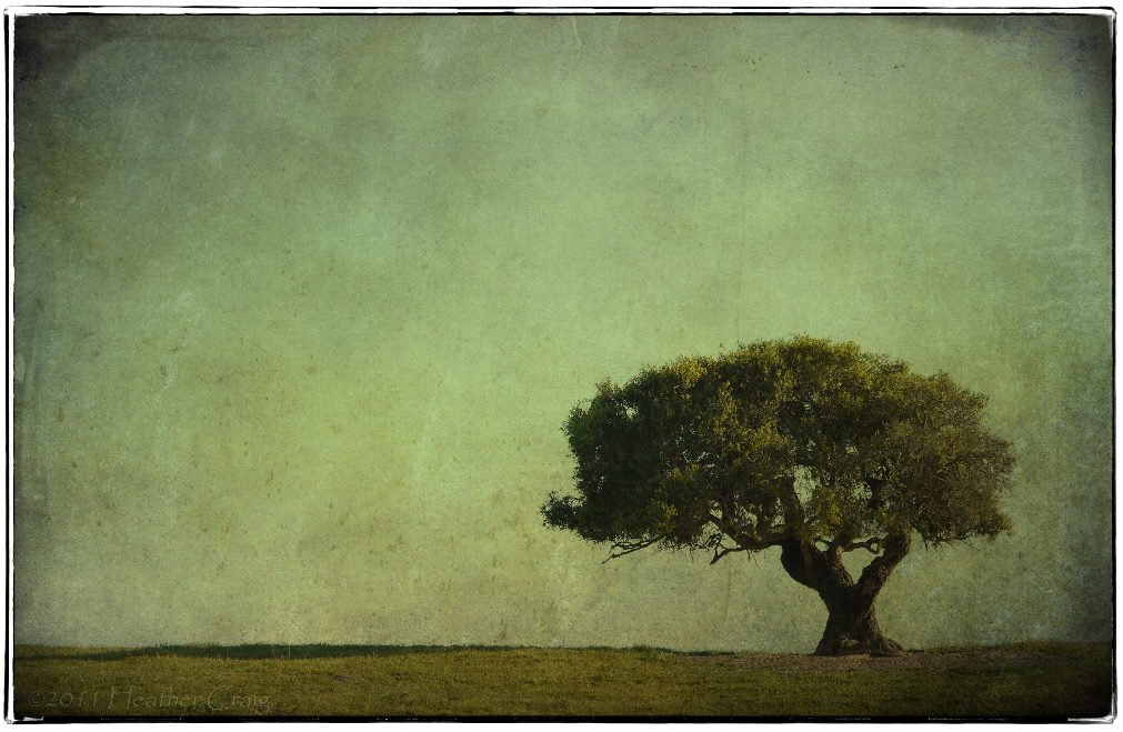 lone tree by pixelchix