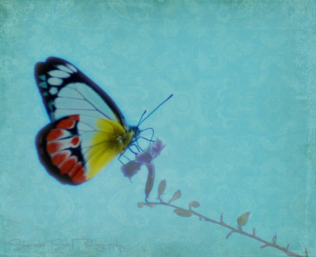 Butterfly dream by bella_ss