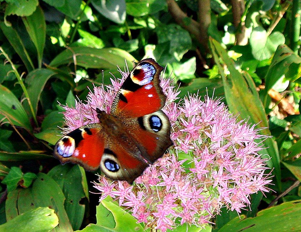 butterfly by gijsje