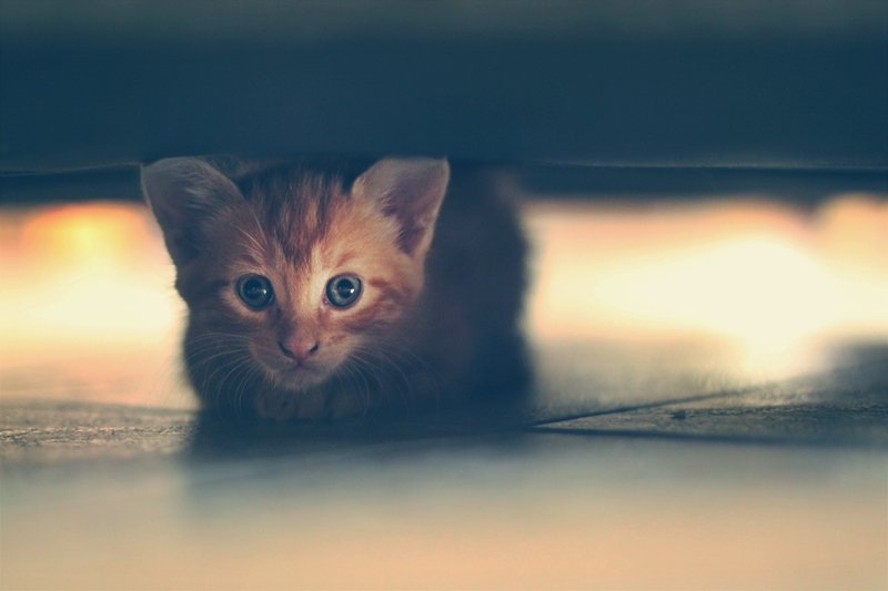Simba's favourite hiding place by pocketmouse