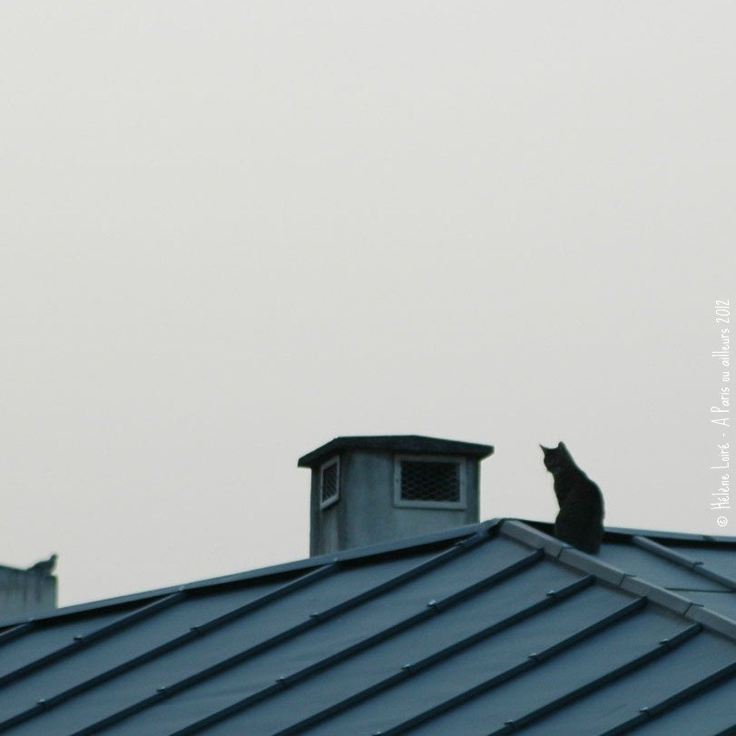 Just for fun: The cat on the roof...  by parisouailleurs