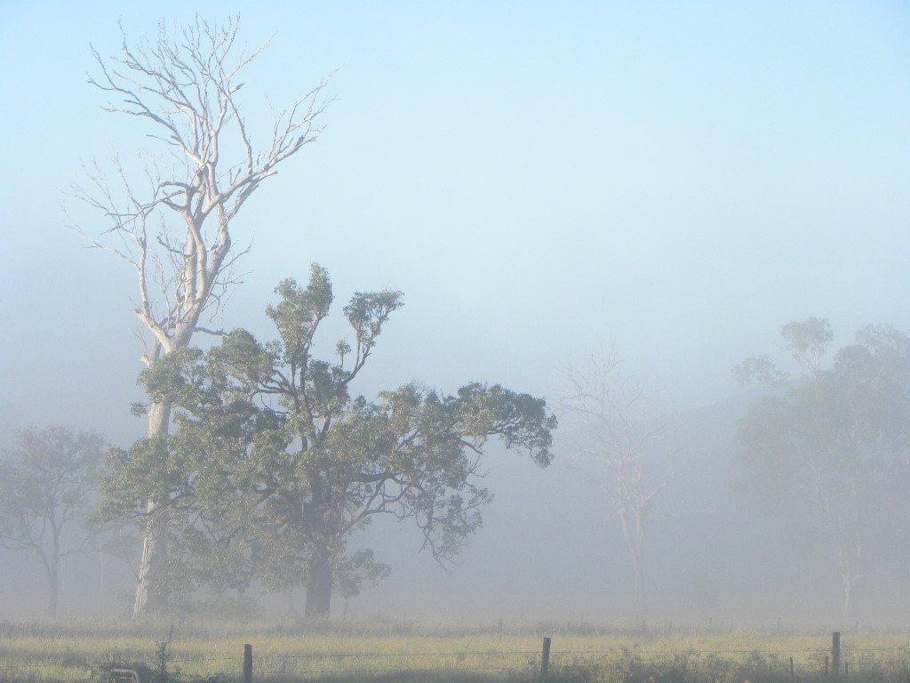 Autumn Mist by ubobohobo