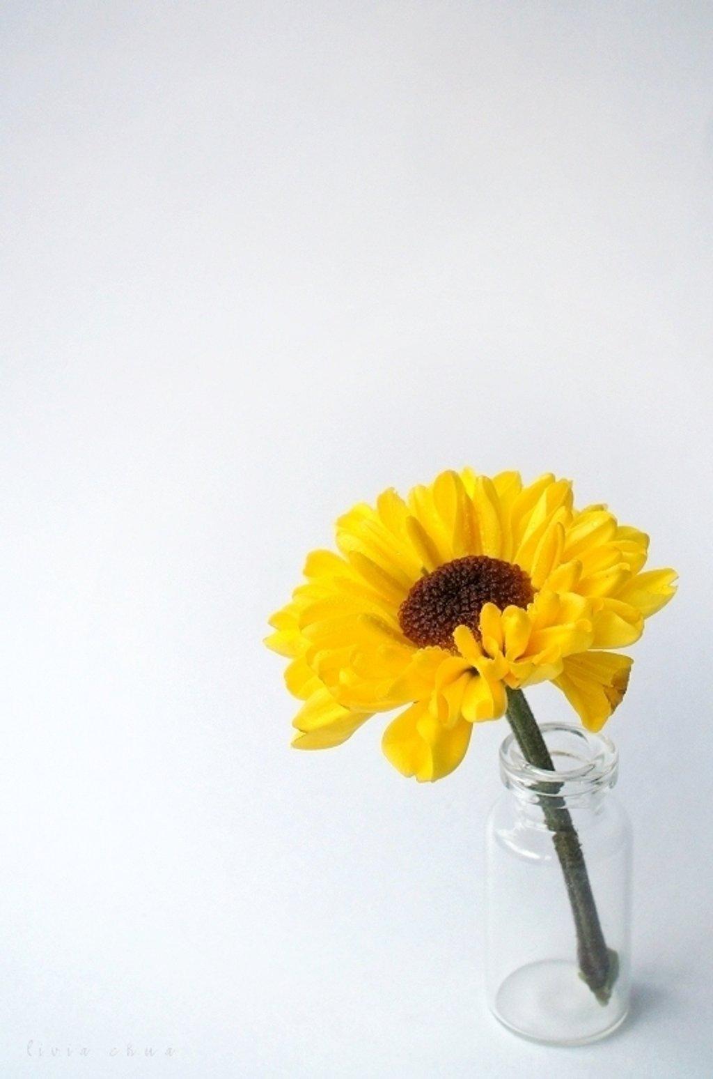 Sunshine In A Bottle by myautofocuslife