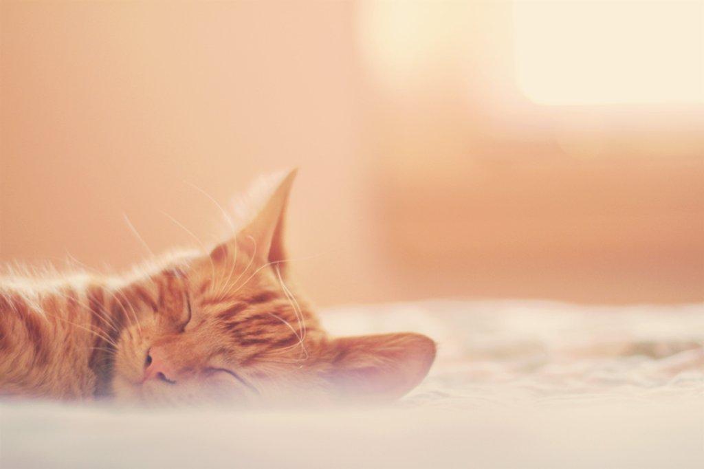 sweet slumber by pocketmouse