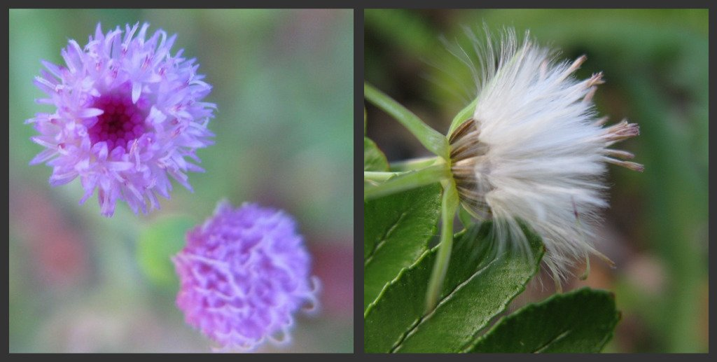 Weeds - Before and After by loey5150