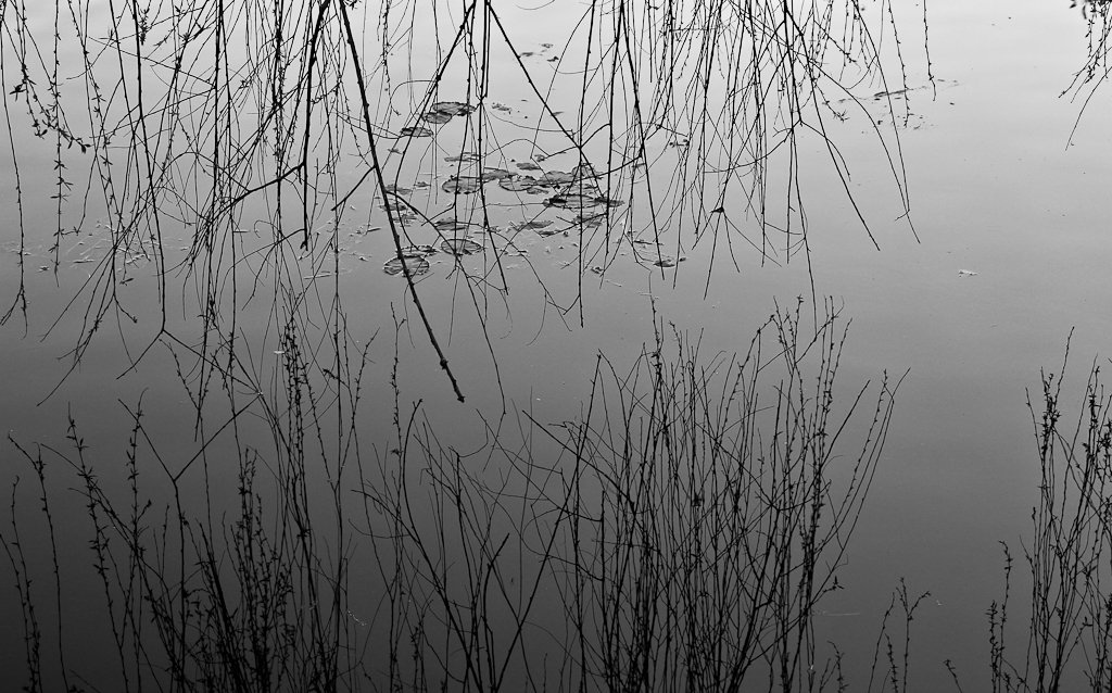 Willow reflected by abhijit