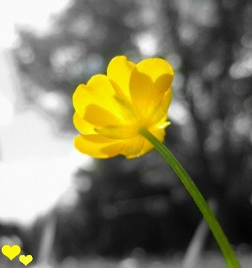 Build me up Buttercup by filsie65