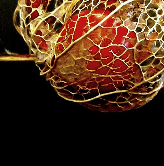 Chinese lantern  by boogie