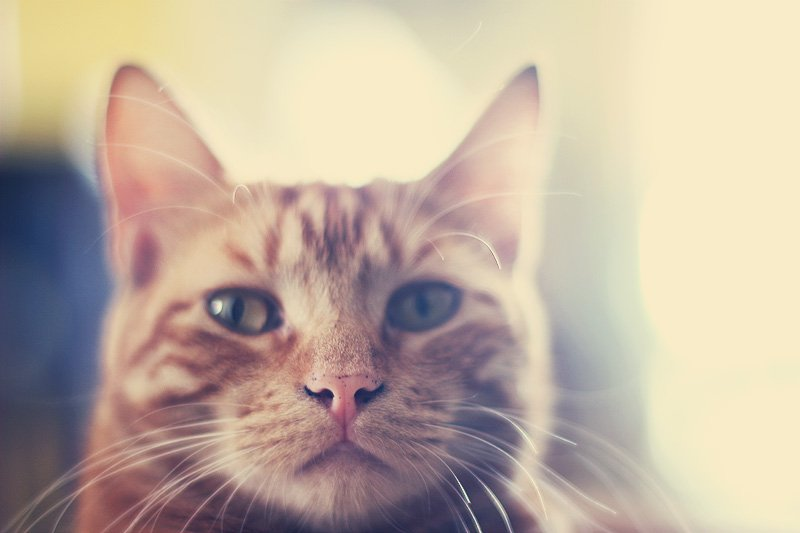dirty-nosed kitty by pocketmouse