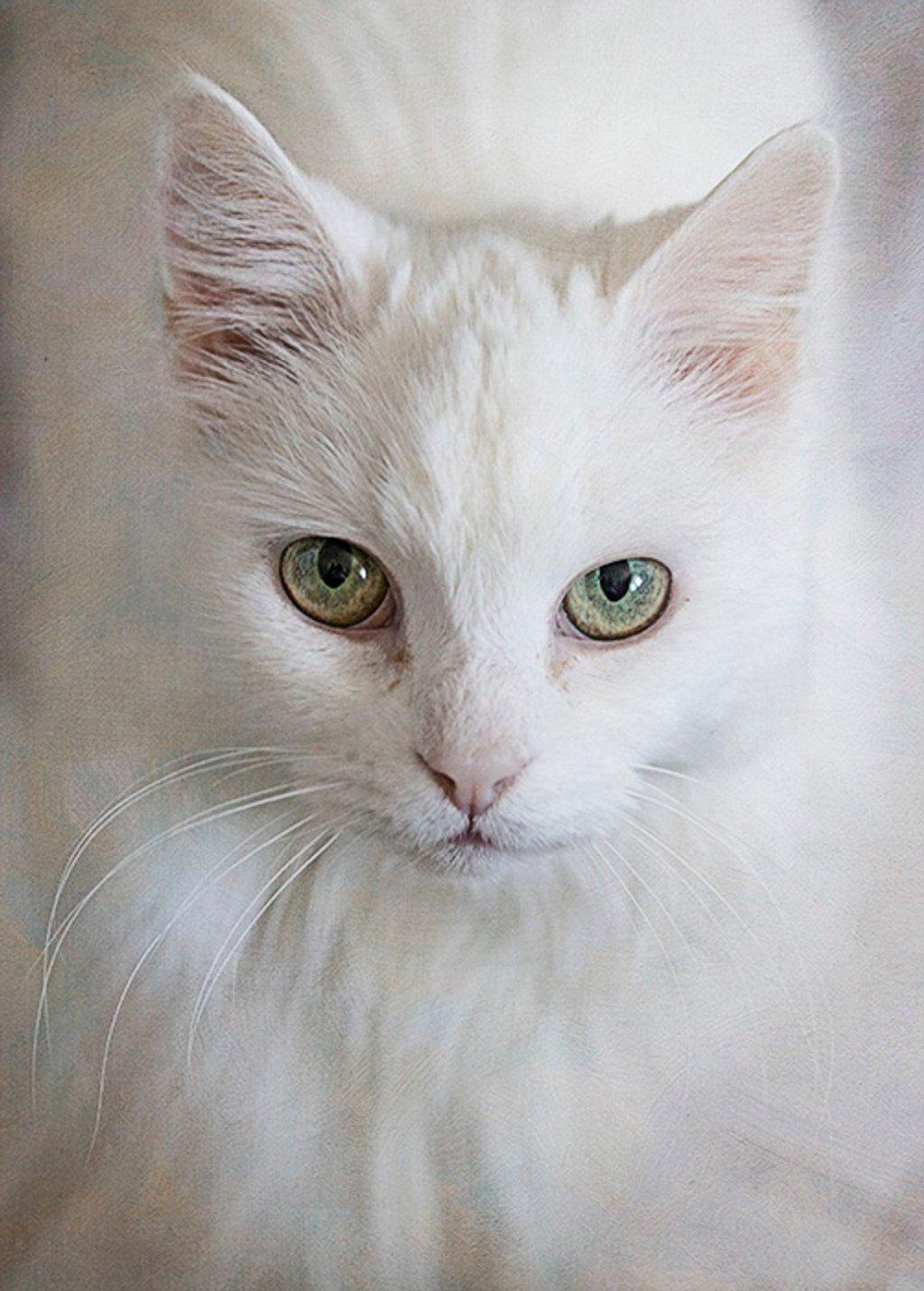 Pastel Cat by gardencat