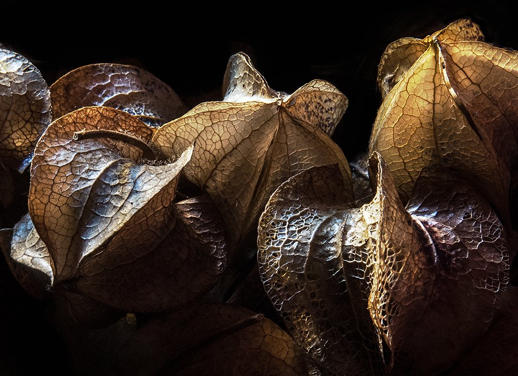 solanum seed pods by kali66