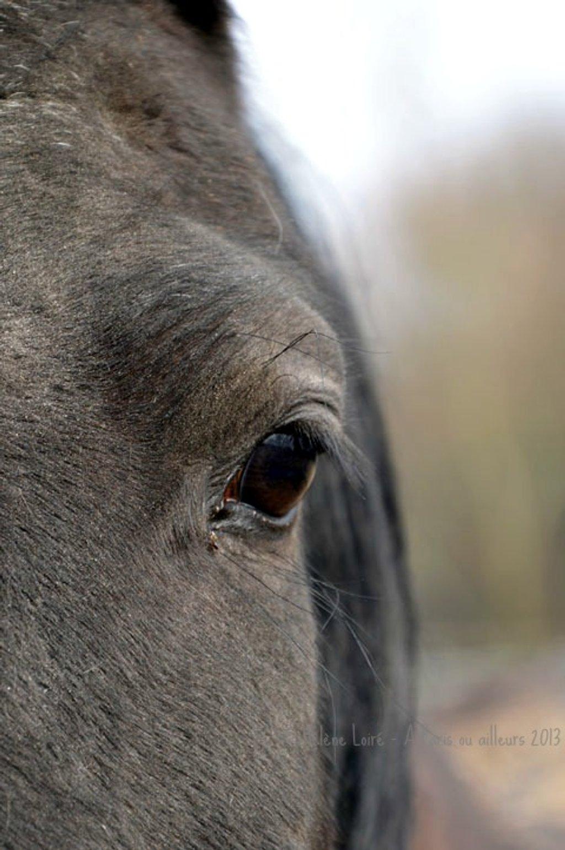 Perle's eye by parisouailleurs