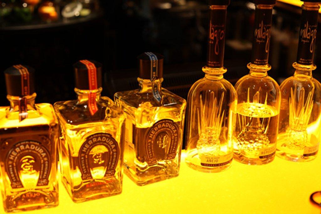 Tequila by steelcityfox