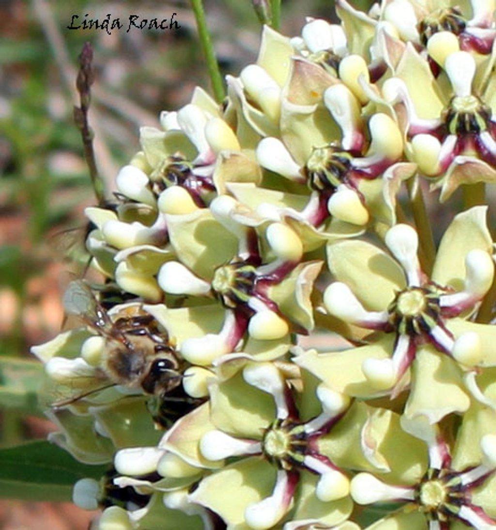 Bee on Wildflower by grannysue