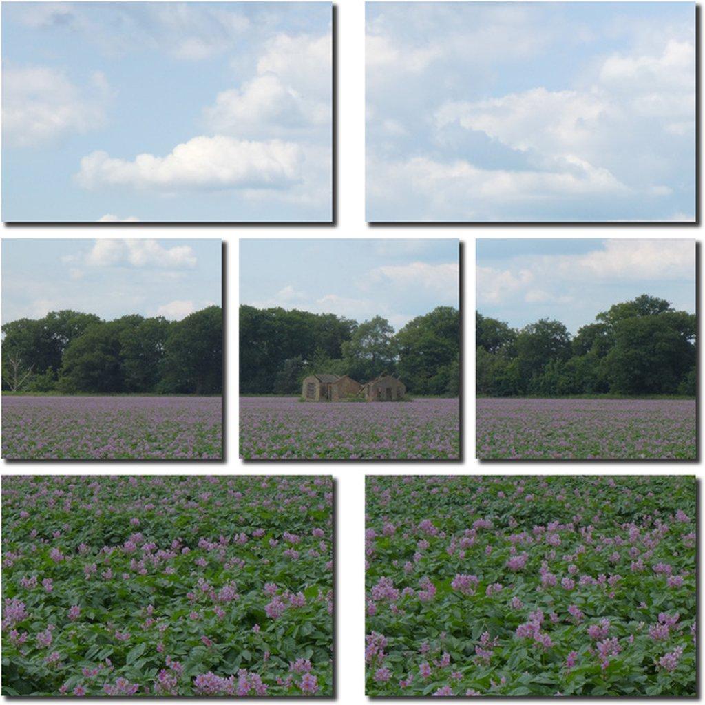 Potato Fields by judithdeacon