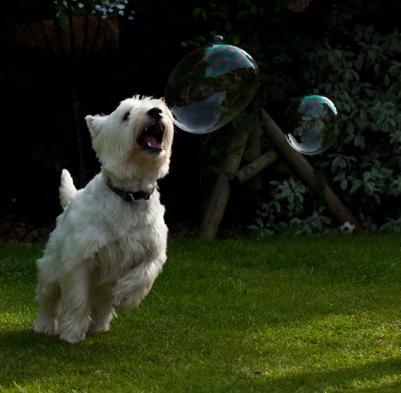 14th July 2013 Photobombed bubble by pamknowler