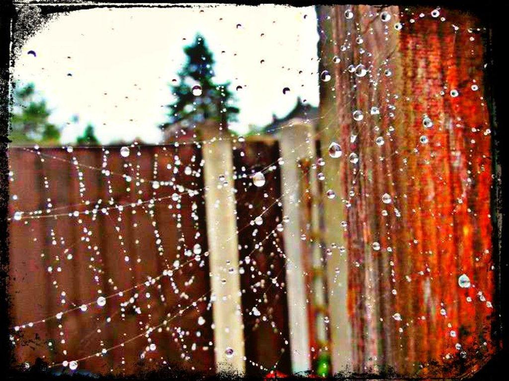 Cobweb and raindrops  by beryl