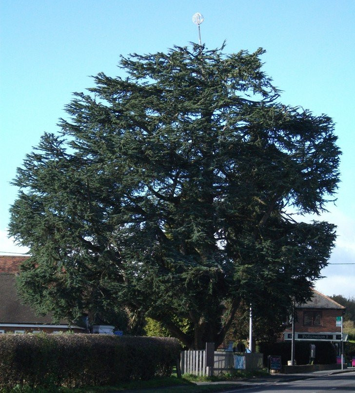 Tree at Naphill by fishers