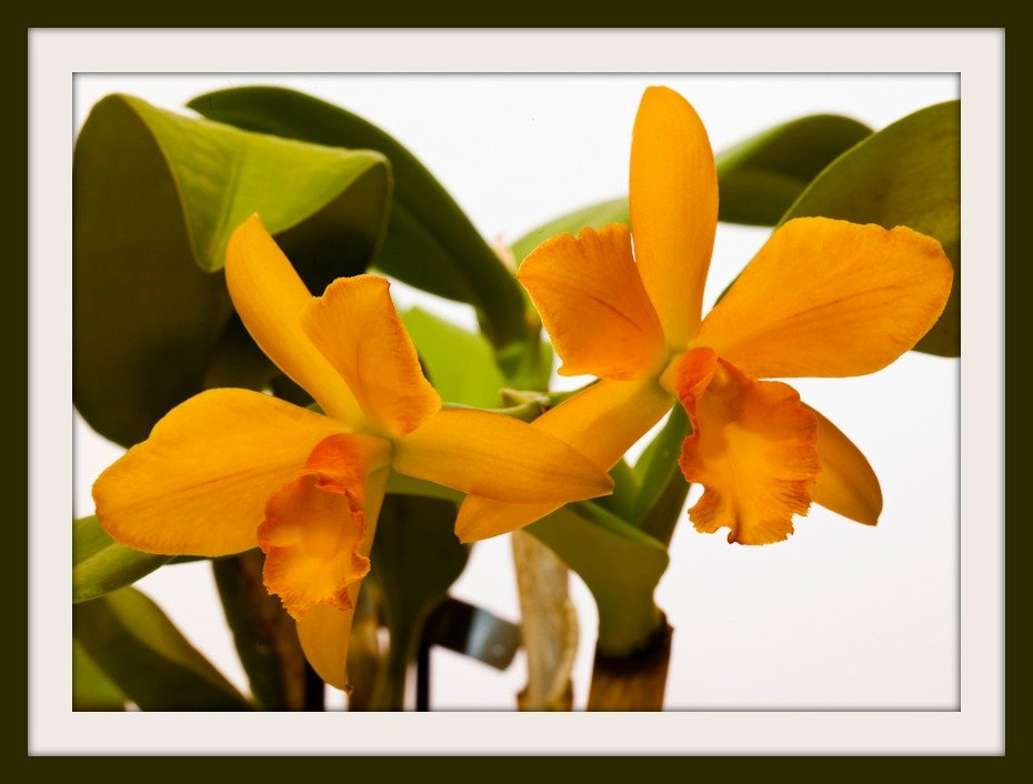 3rd February 2014 - Another Orchid bargain by pamknowler