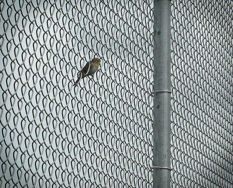 Bird on a wire by mittens