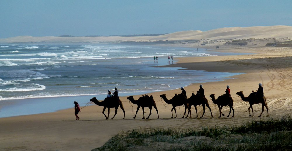 Camels at Birubi Beach by onewing