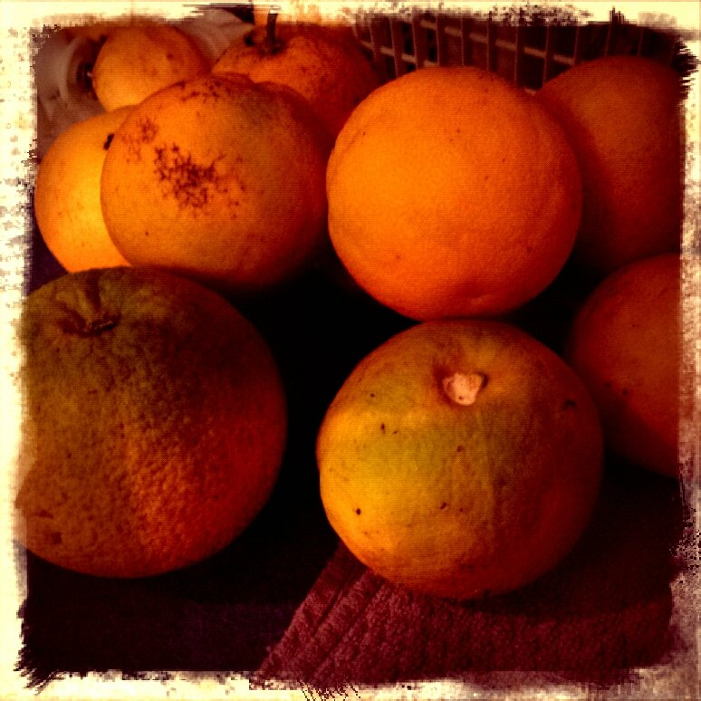 Ugly Oranges by bambilee