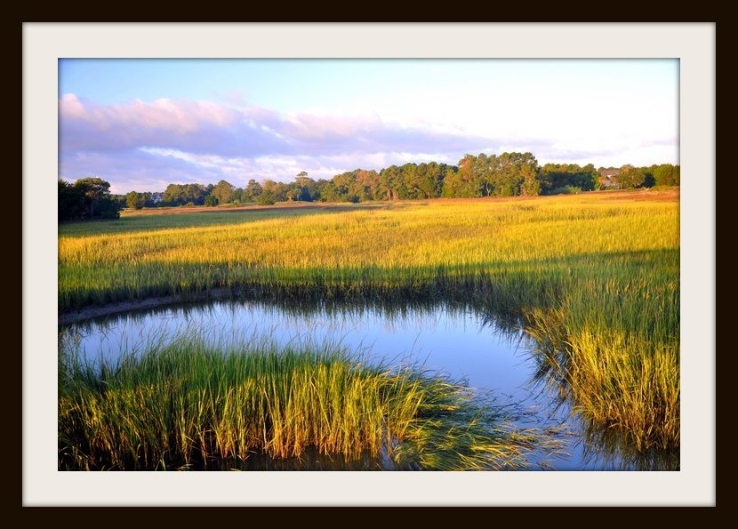 Marshes by stownsend