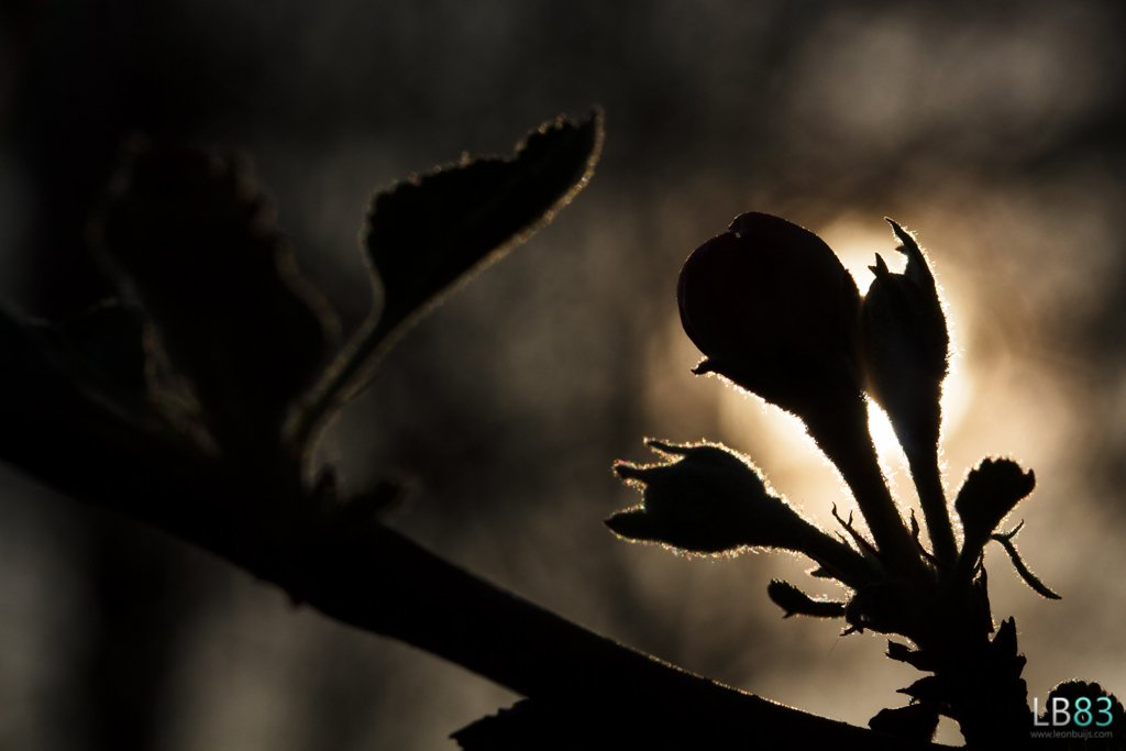 Blossoming into the Light by leonbuys83