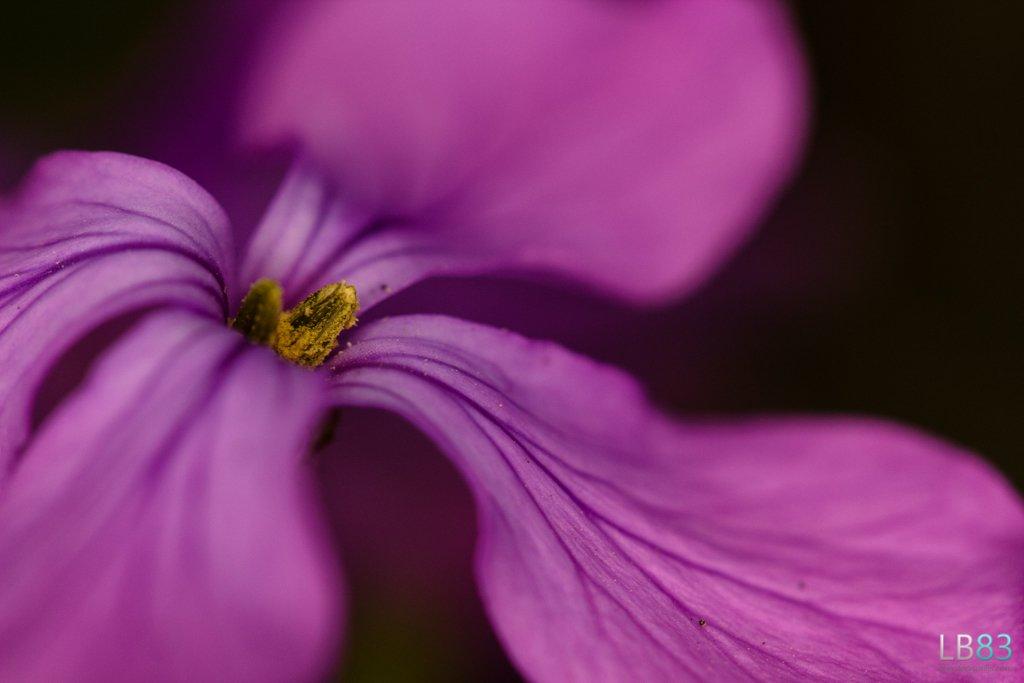 Roadside flower by leonbuys83