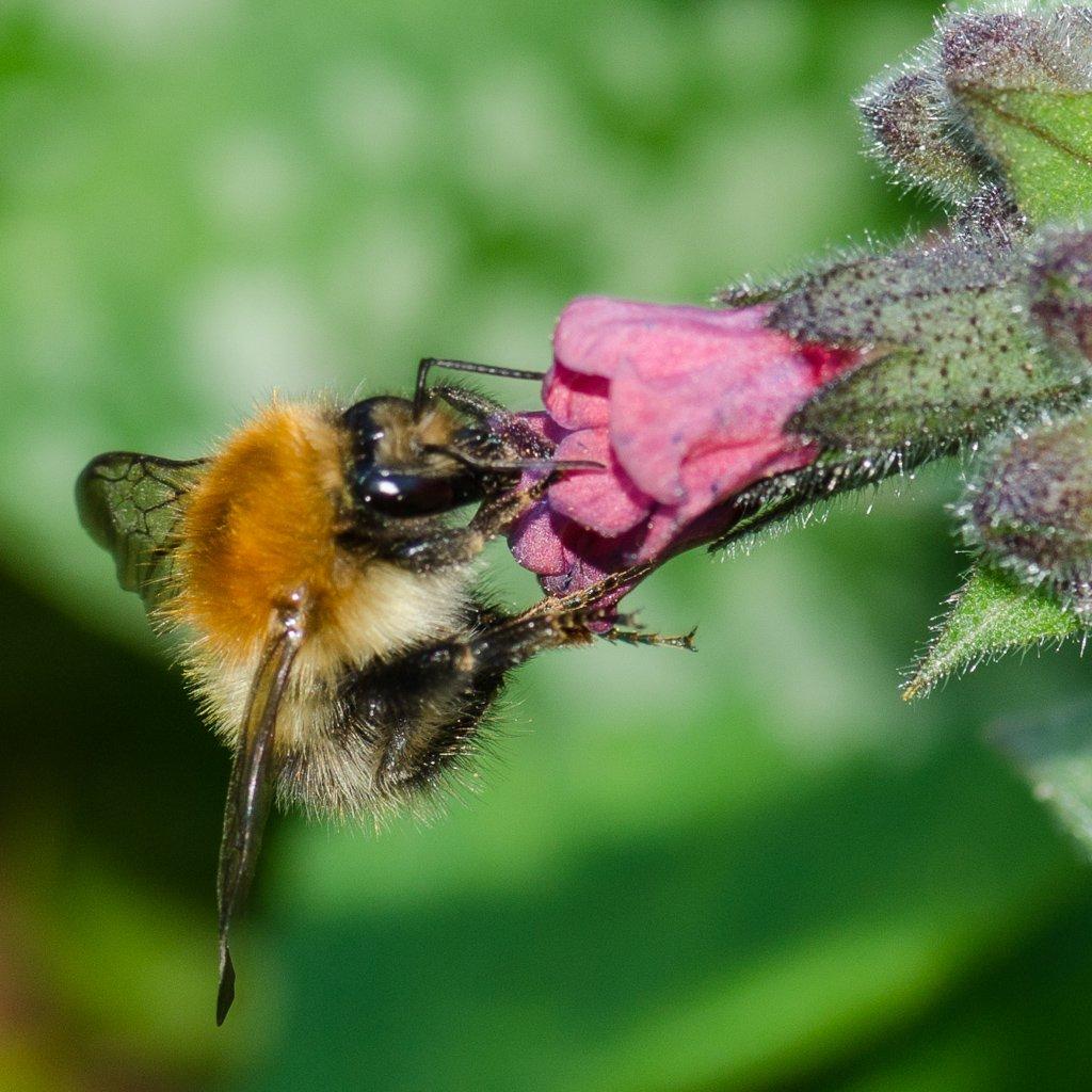 Bee - 15-04 by barrowlane