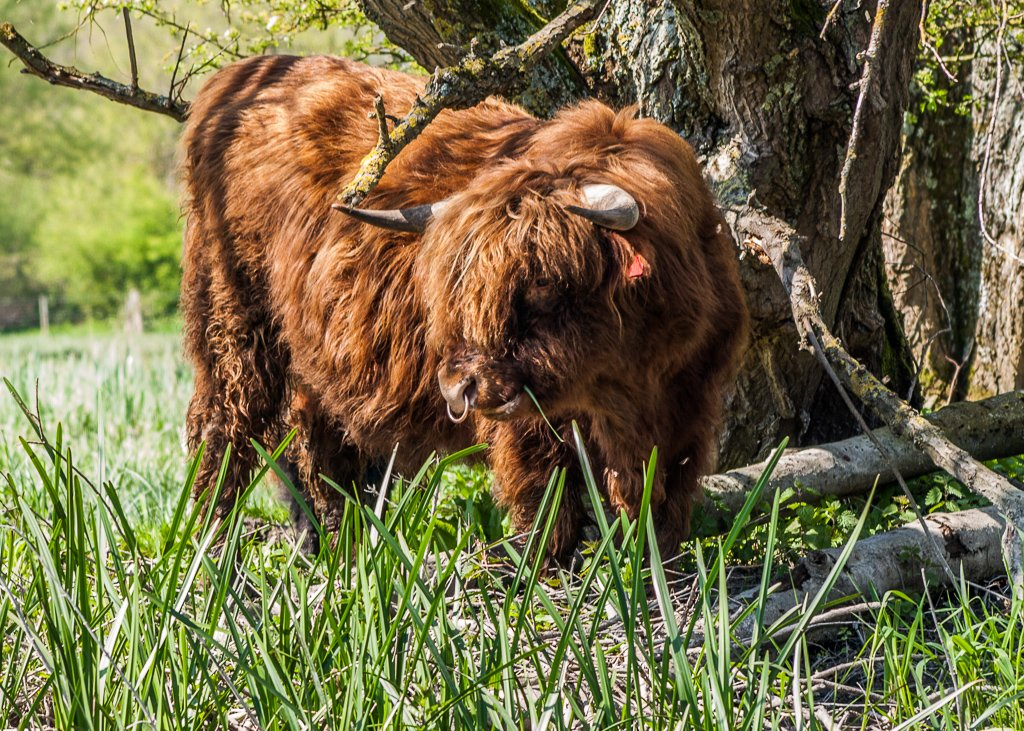 Beware of the bull - 16-04 by barrowlane