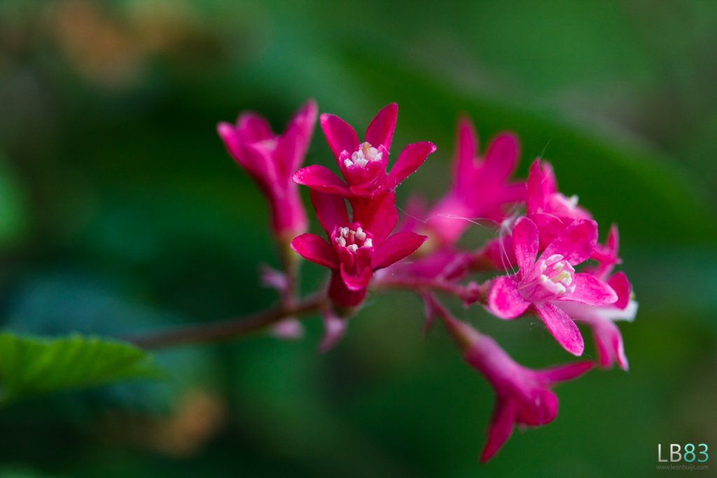 Pink Flowers by leonbuys83